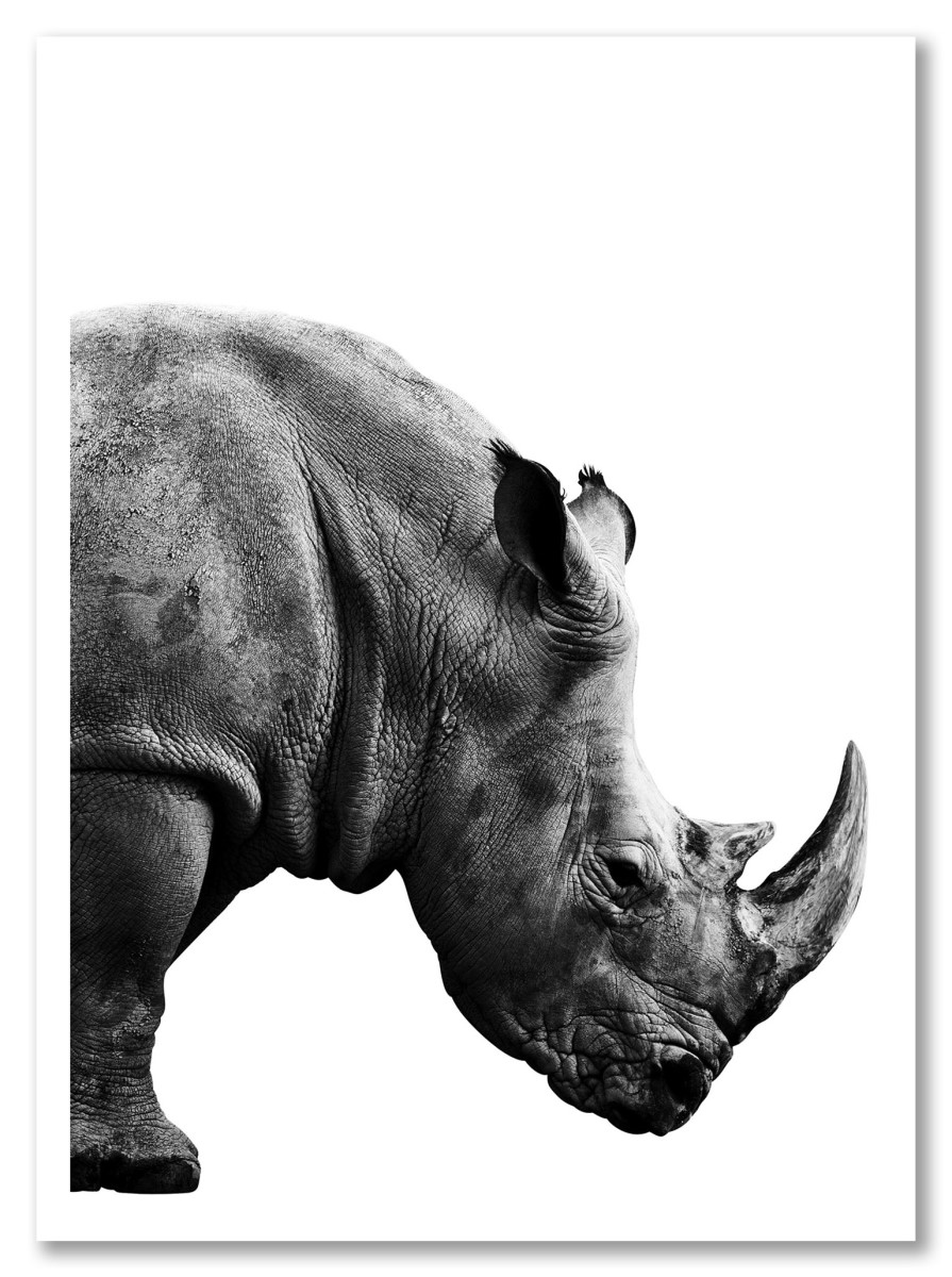 Animaux - Rhinocéros noir et blanc
