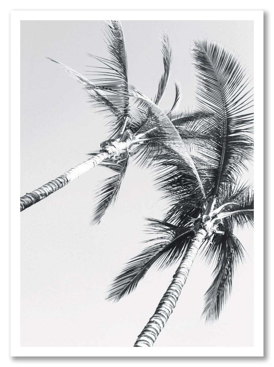 Botanique - Palmier sombre
