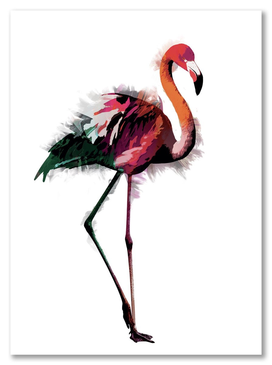Animaux - Flamant Rose Multicolor