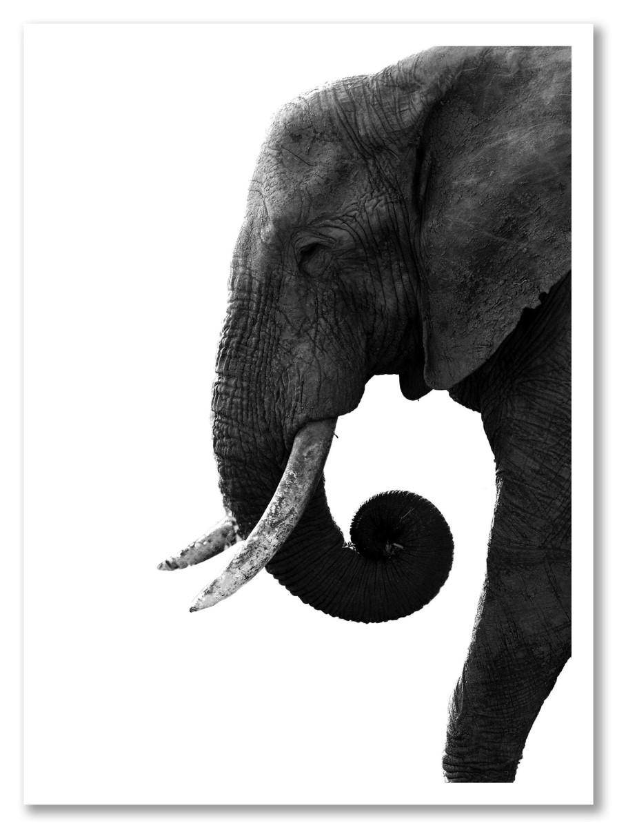 Animaux - Eléphant noir et blanc