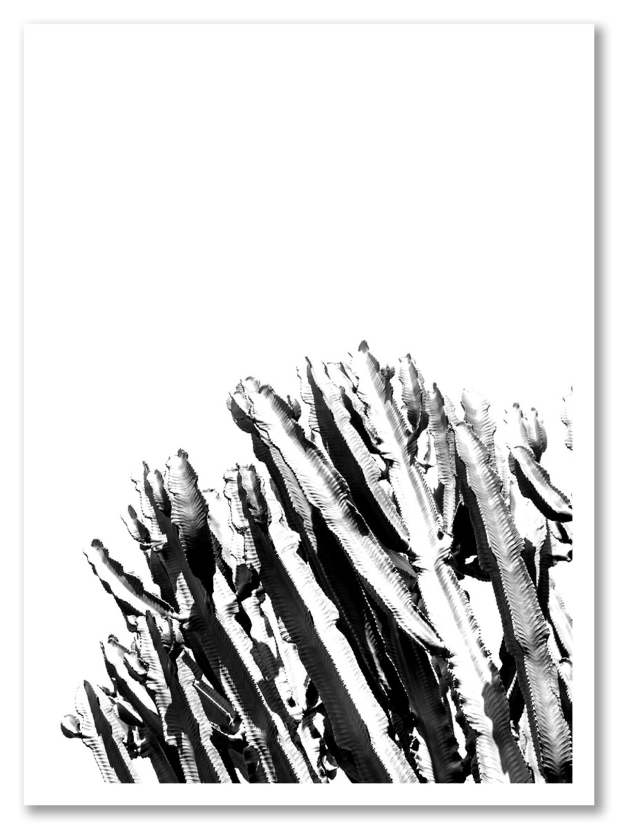 Cactus - Bouquet de Cactus