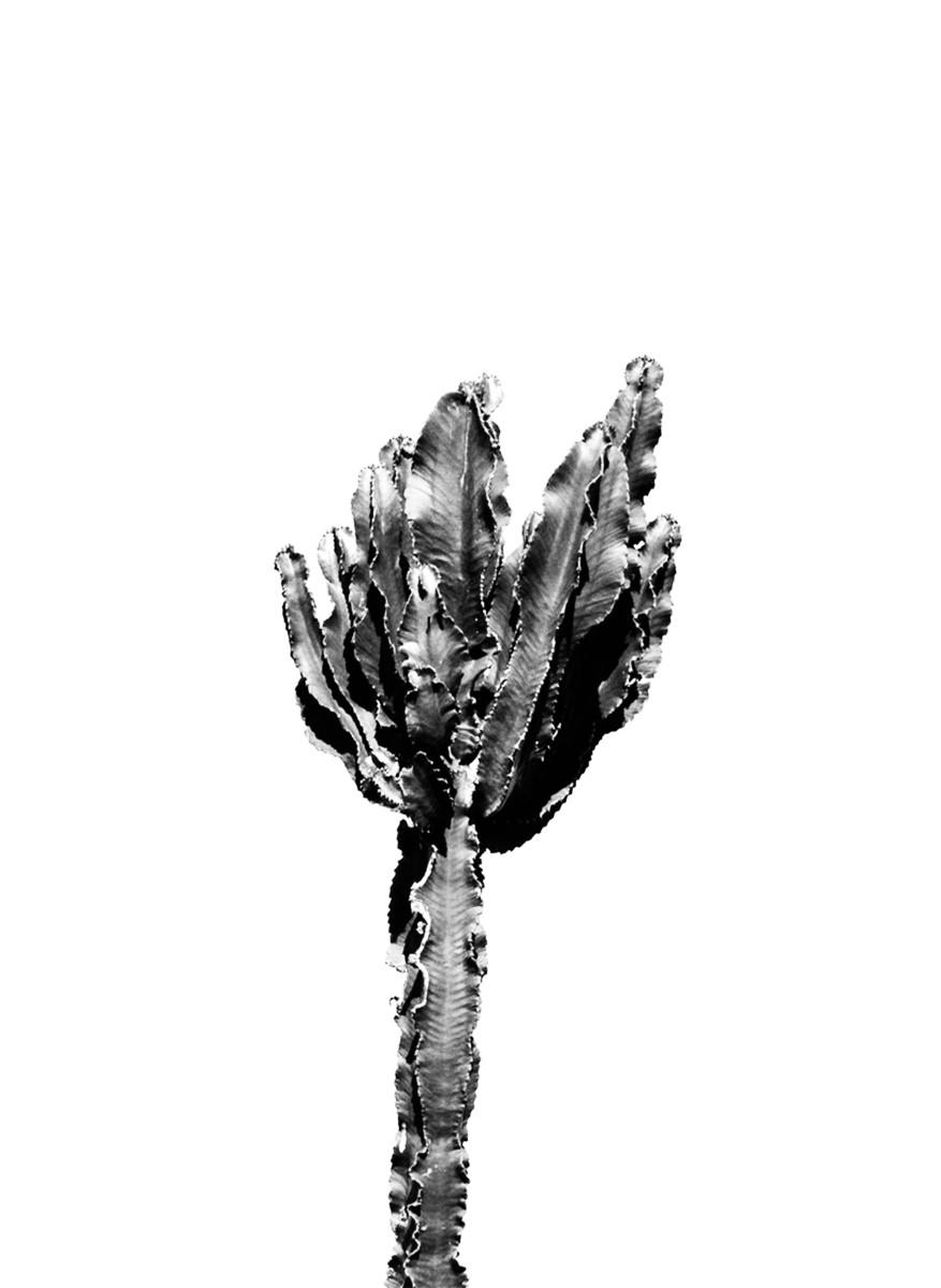 Nature - Cactus Noir et Blanc
