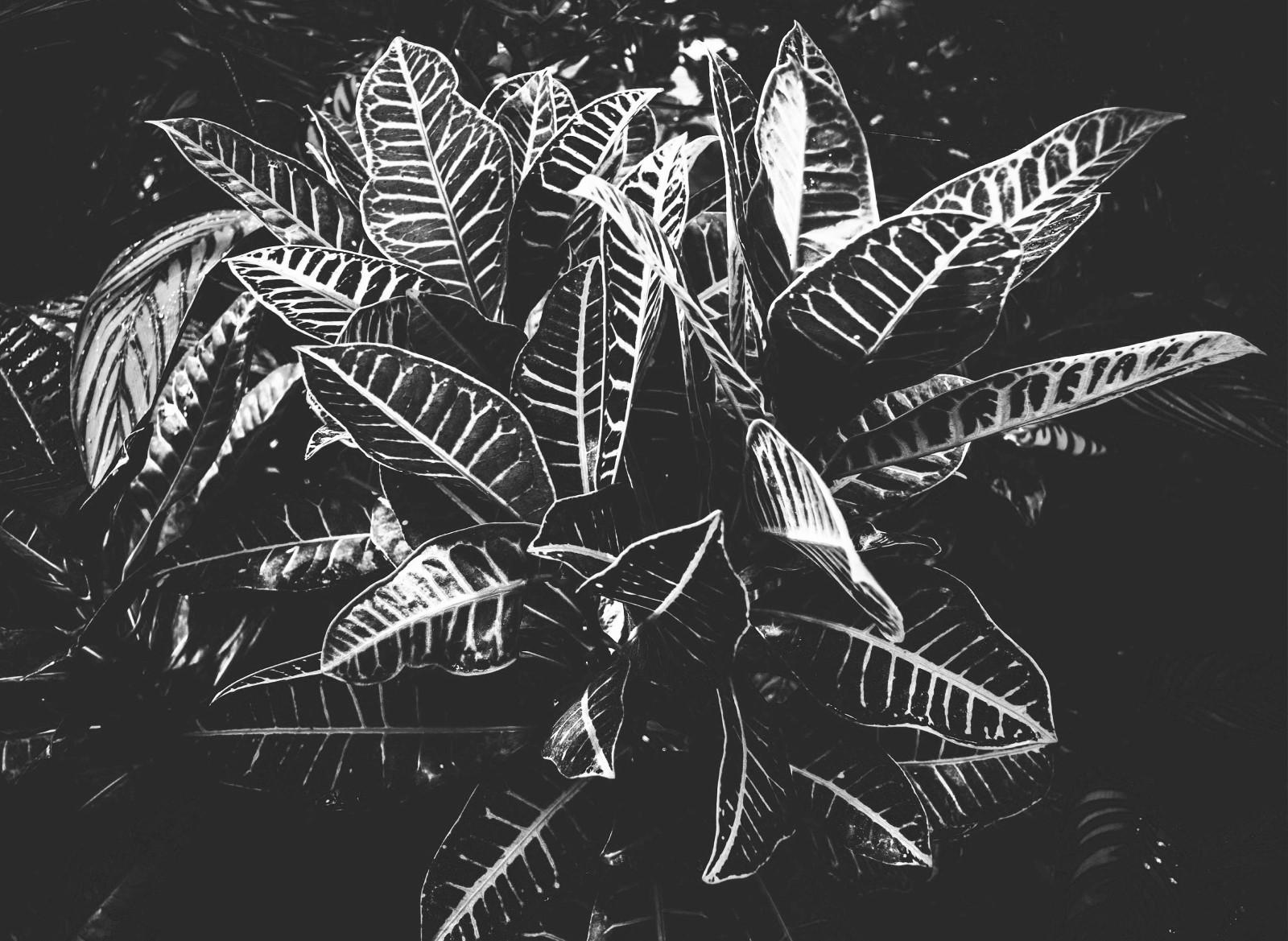 Nature - Feuille Noir et Blanc